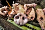 В апреле вступают в силу новые правила на продажу домашнего мяса