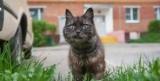 Русские застройщик должен оборудовать подвалы шлюзов для кошек